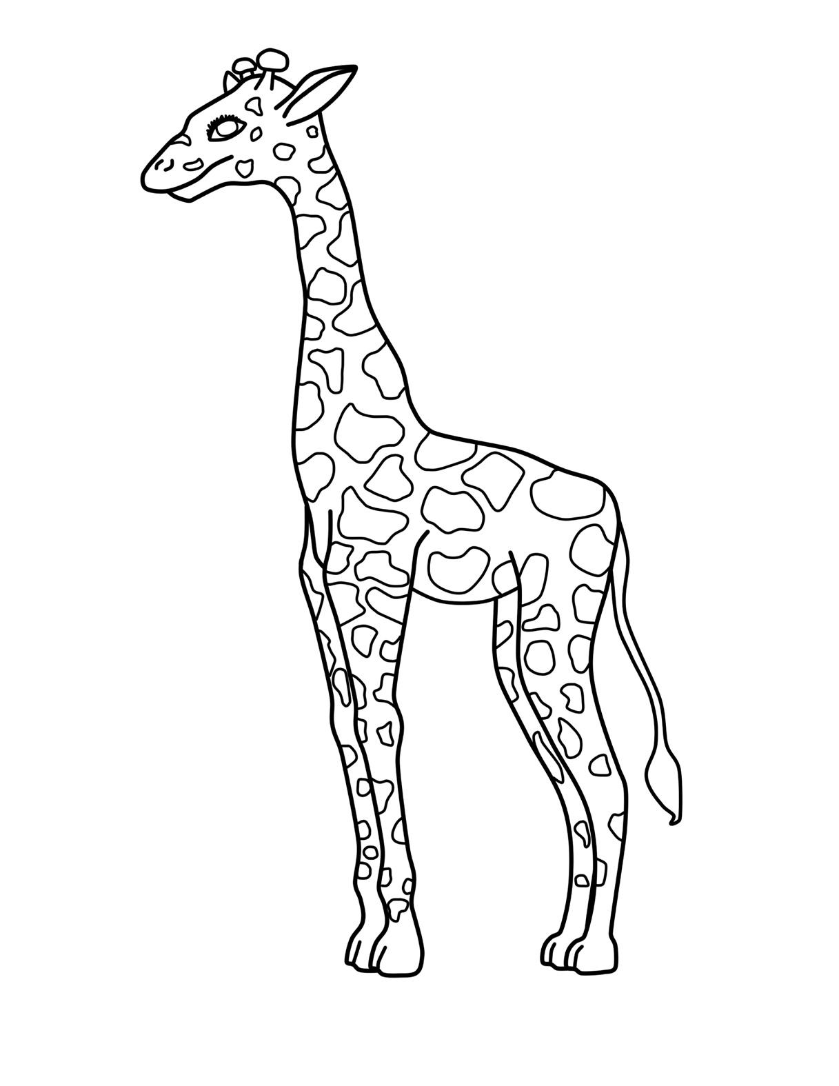 1217x1575 Giraffe Clipart Colouring Page