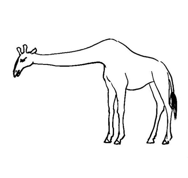 600x568 Giraffes Coloring Pages
