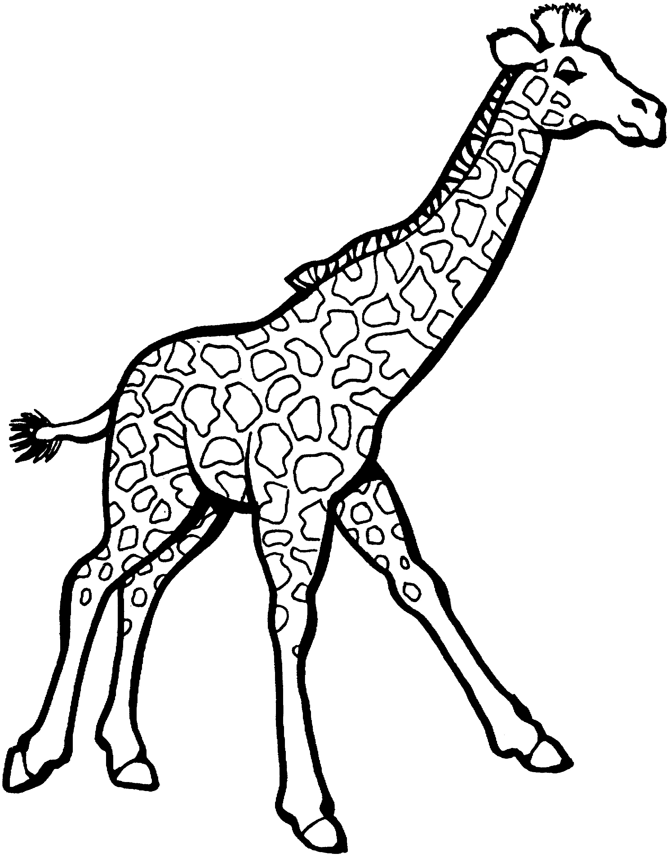 2233x2859 Coloring Pages Giraffe Colouring Page