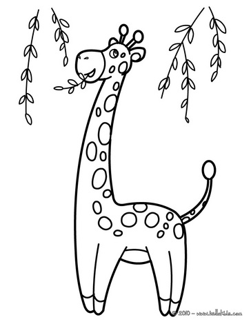 Giraffe Drawing For Kids