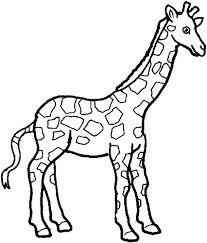 207x243 Gallery Giraffe Drawings For Kids,