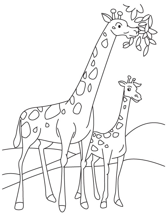 568x740 Giraffe Coloring Pages 360coloringpages
