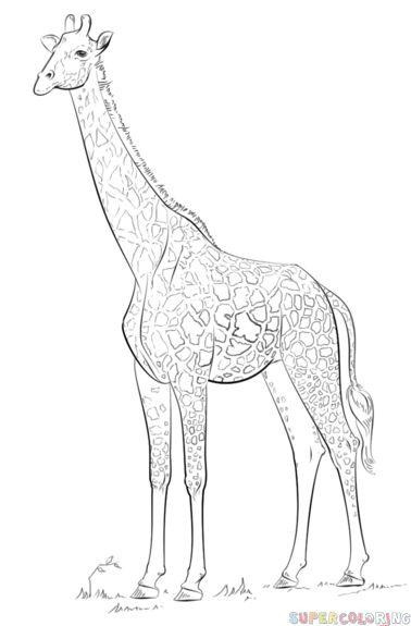 378x575 The Best How To Draw Giraffe Ideas On Easy Giraffe