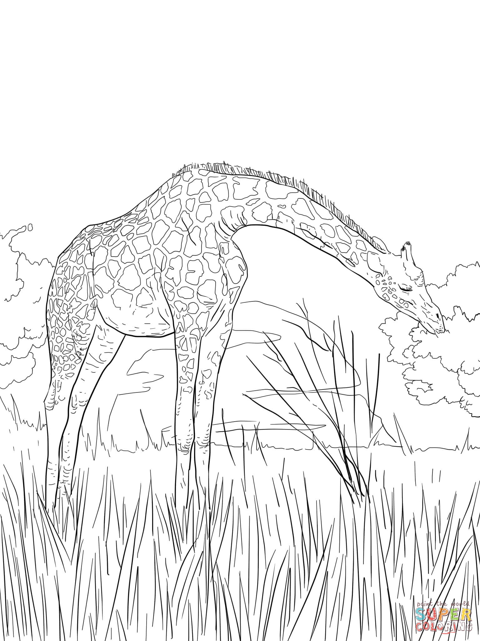 1536x2048 West African Giraffe Coloring Page Free Printable Pages