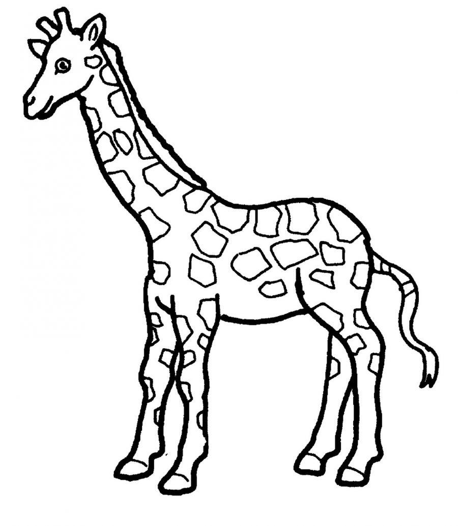 900x1034 Giraffe Coloring Page 01 Church Crafts Giraffe