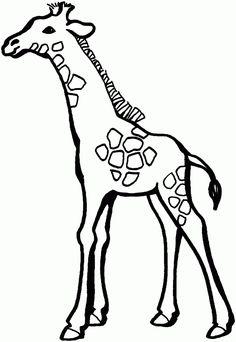 236x342 Smart Class Zebra'S, Tigers, And Giraffes Oh My!! Elementary