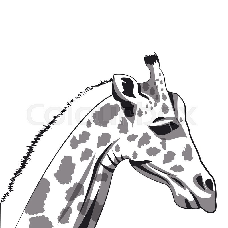 800x800 Flat Design Giraffe Drawing Icon Vector Illustration Stock