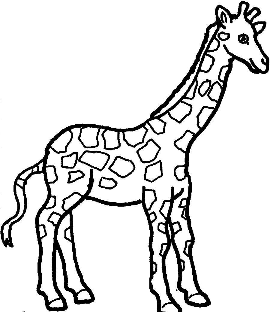 900x1039 Giraffe Coloring Pages For Kids Preschool In Sweet Draw