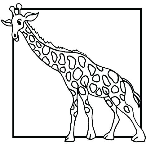 500x480 Giraffe Coloring Pages To Print Download Free Baby Giraffe Drawing
