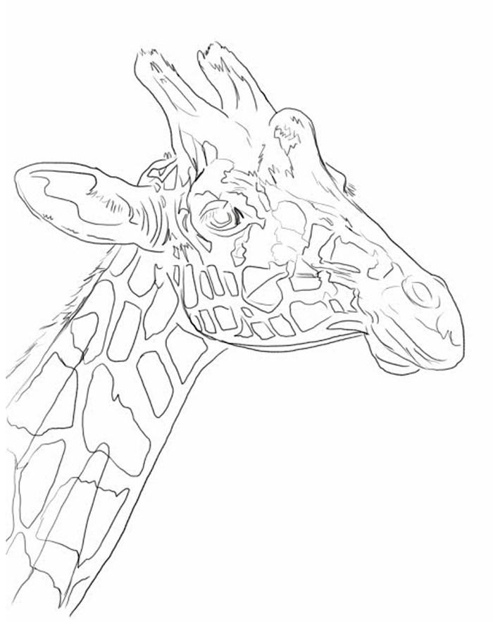 700x883 Giraffe Oil Over Acrylic Painting Demonstration