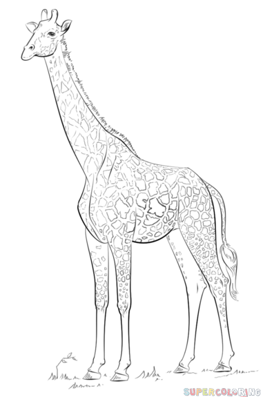 378x575 How To Draw A Realistic Giraffe Step By Step. Drawing Tutorials