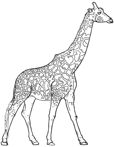 371x480 Realistic Giraffe Coloring Page Free Printable Coloring Pages