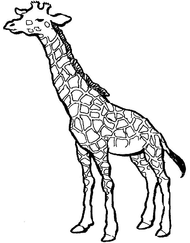 650x830 Simple Giraffe Outline You To Paint A Picture Giraffe This