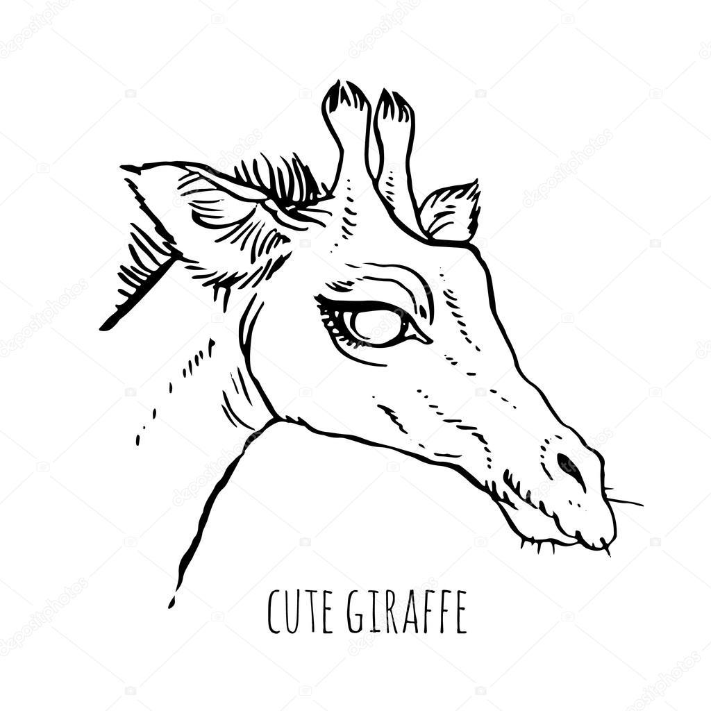 1024x1024 Drawing Head Of Giraffe Stock Vector Annasuchkova