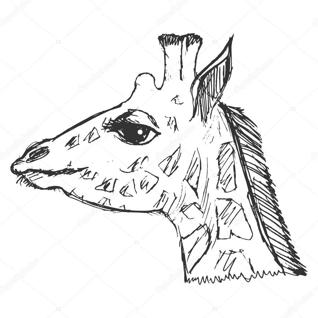 1024x1024 Hand Drawn, Grunge, Sketch Illustration Of Giraffe Stock Vector