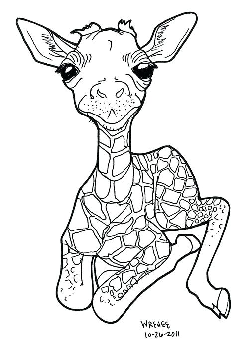 500x693 Baby Giraffe Coloring Pages 66 And Baby For Adults Kids Giraffe