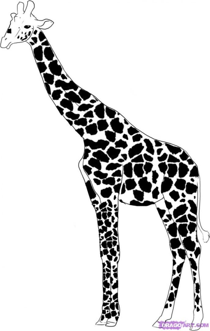687x1085 Coloring Pages Giraffe Drawing 003 Coloring Pages Giraffe