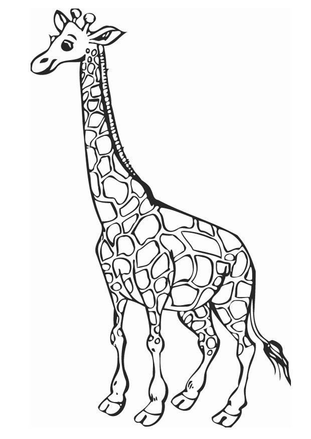 620x875 Coloring Page Giraffe