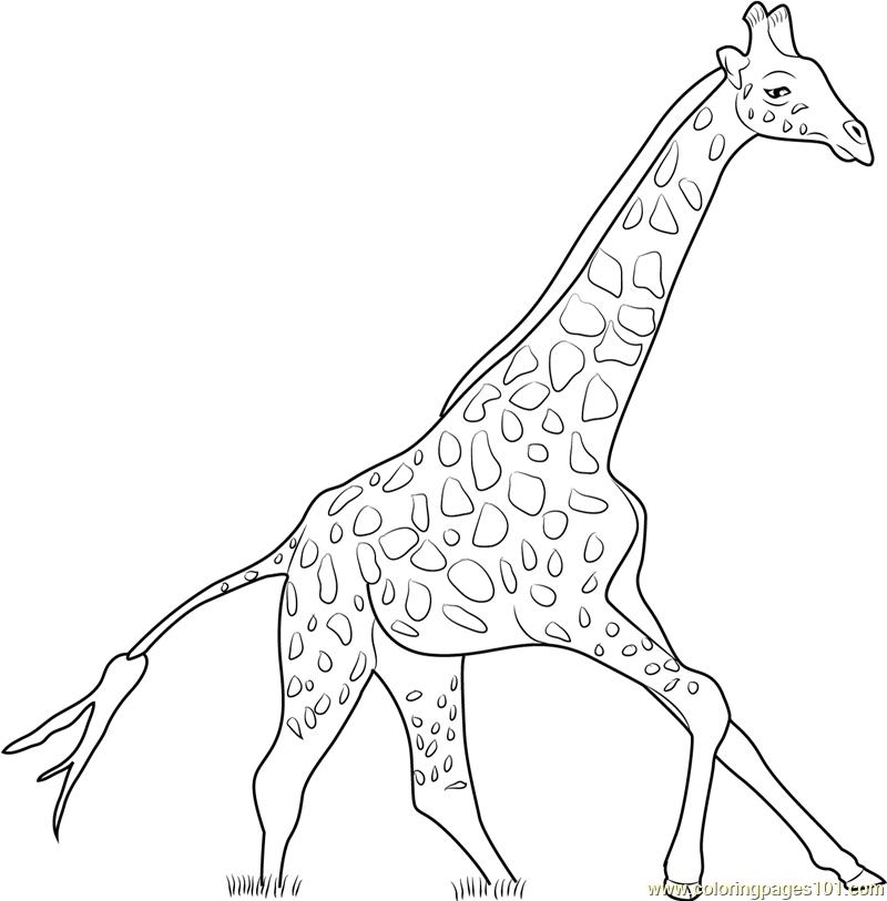 Giraffe Drawing Outline at GetDrawings | Free download