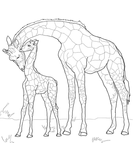 447x480 Baby Giraffe And Mother Coloring Page Free Printable Pages