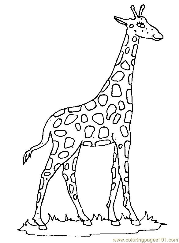 giraffe head drawing at getdrawings com free for personal use