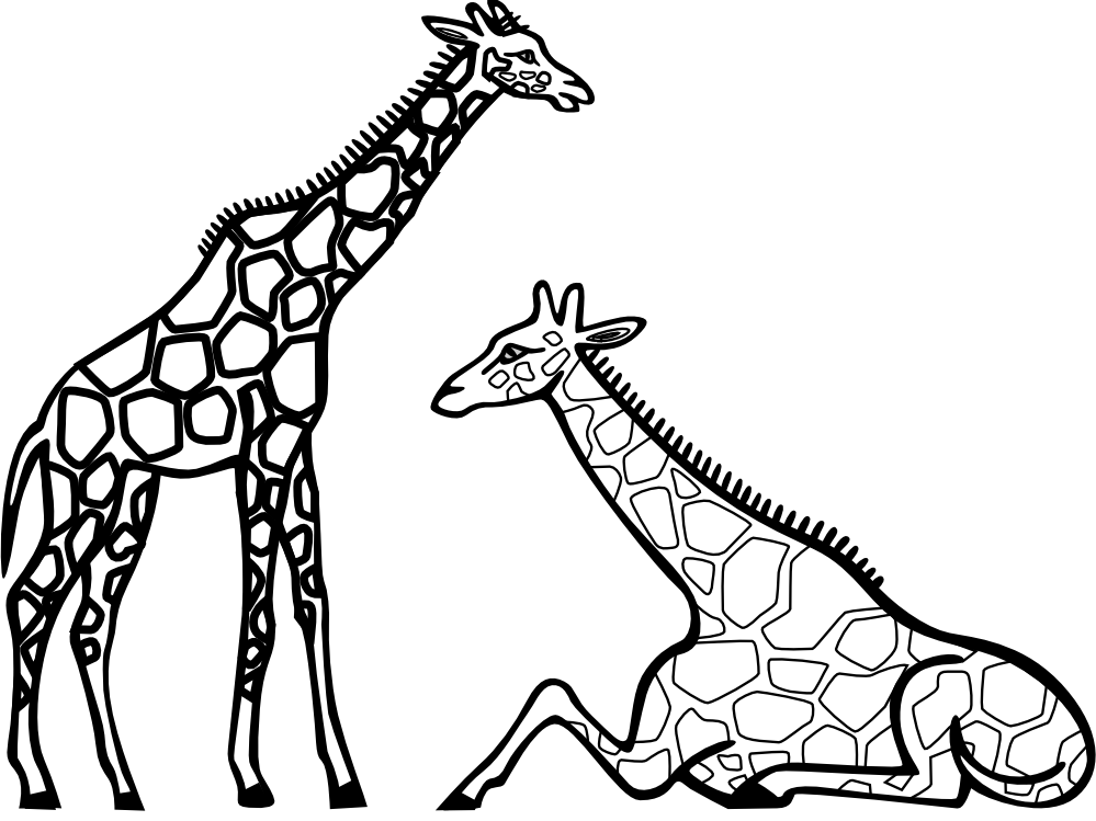giraffe outline drawing at getdrawings com free for personal use