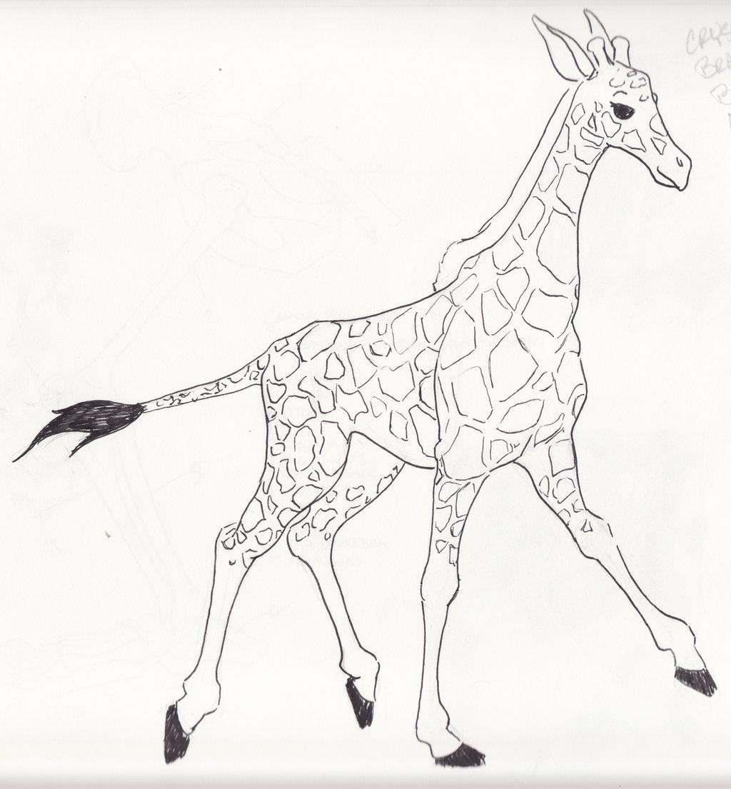 1024x1105 Giraffe Sketch Drawing