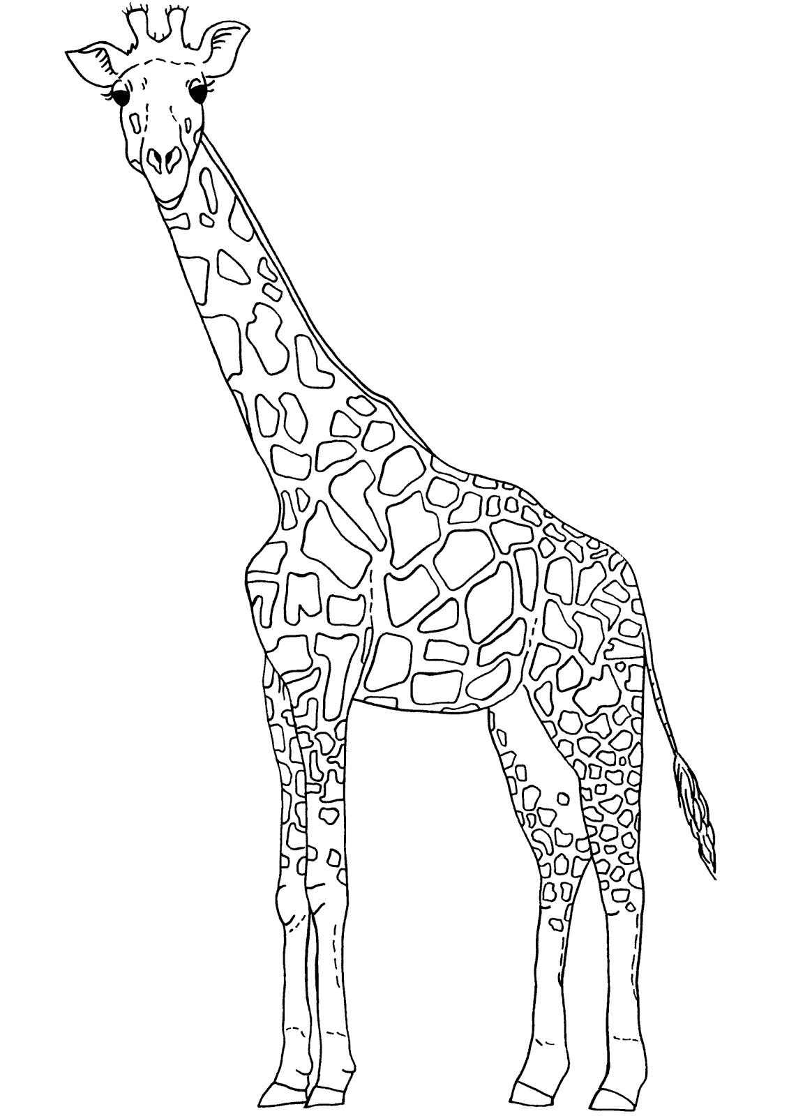 1131x1600 Giraffe Outline Drawing Clipart