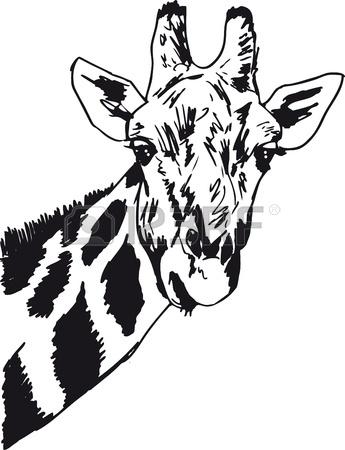 345x450 Hand Drawn Ostrich Bird Head Vector Illustration. Sketch Isolated