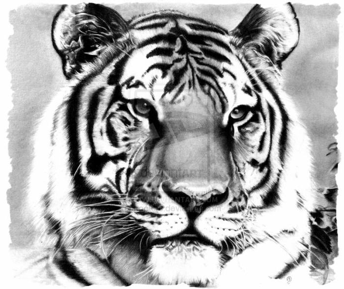 700x588 Pencil Drawings Of Animals By Debbie Engel