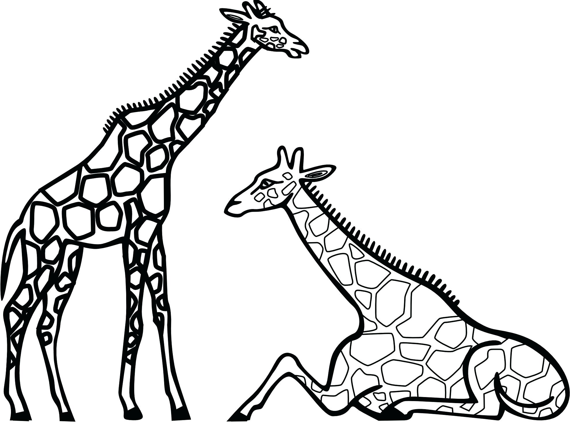 1979x1483 Coloring Outstanding Printable Pictures Of Giraffes. Printable