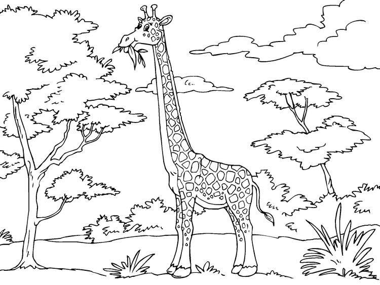 750x563 Coloring Page Giraffe