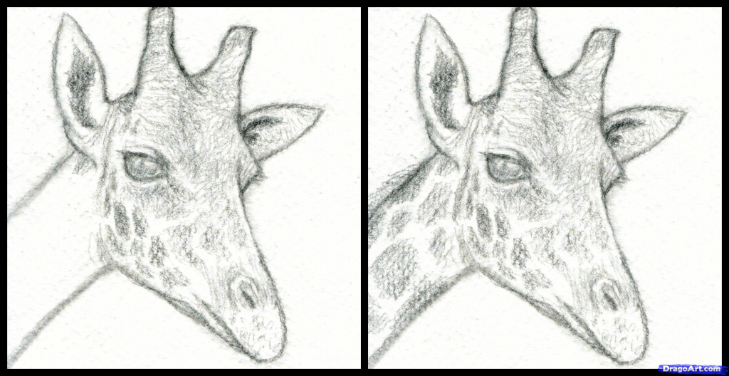1024x528 Giraffe How To Draw Giraffe Realistic Drawing Drawing Images