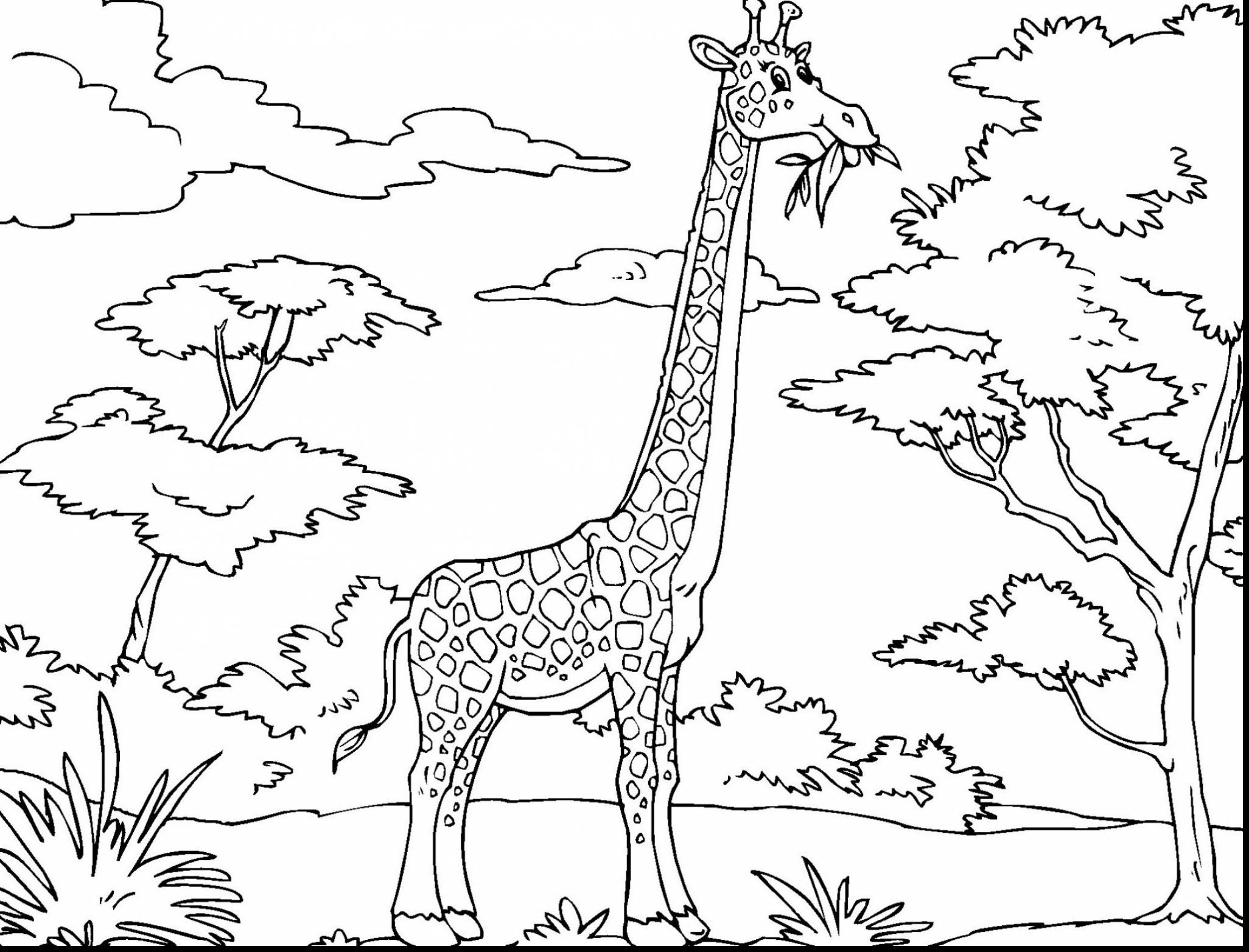 2052x1564 Impressive Pictures Of Giraffes To Color 20