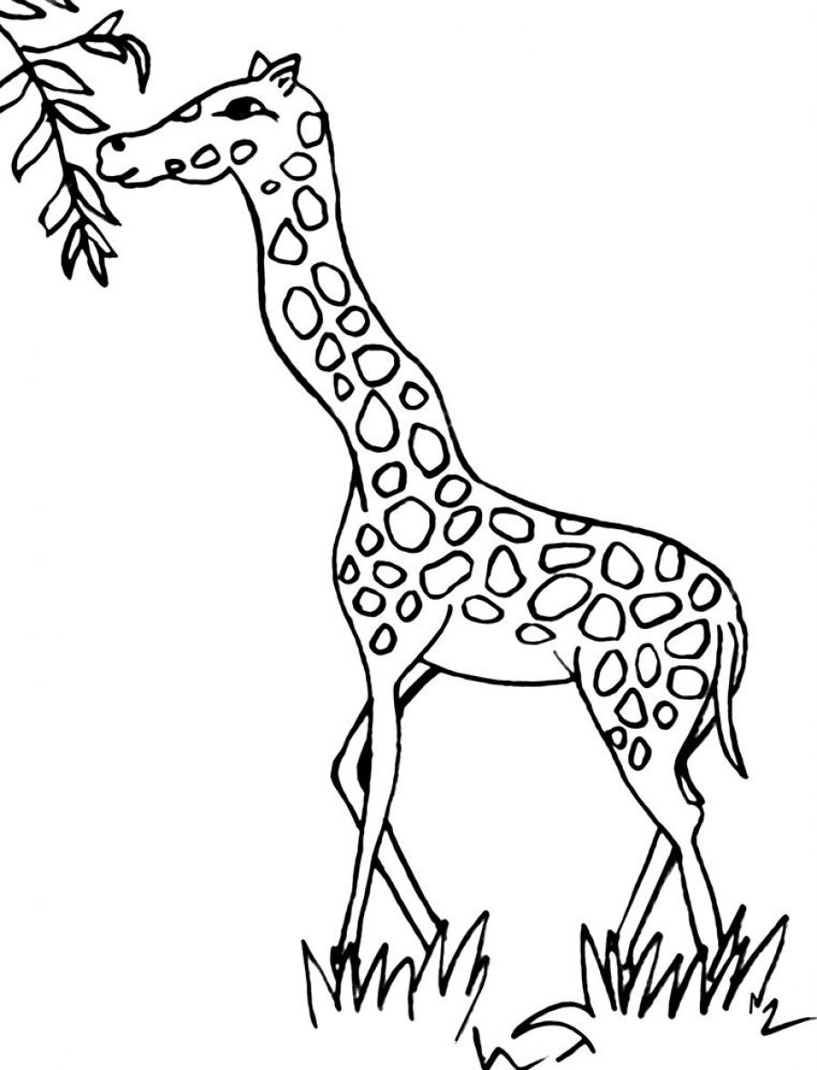 900x1179 Pin By On Giraffe Coloring Pages