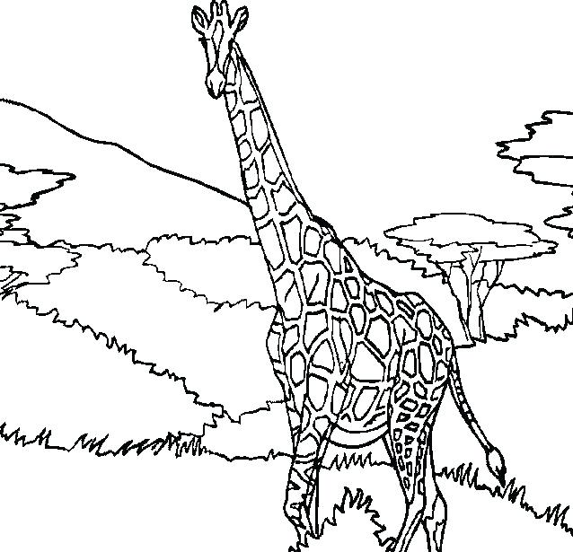 638x615 Super Idea Coloring Page Of A Giraffe Hand Drawn Pages Zentangle
