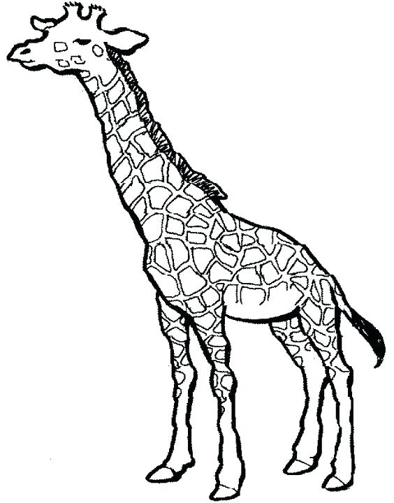 564x720 Coloring Pages Of Giraffes Also Simple Drawings Mandala Coloring