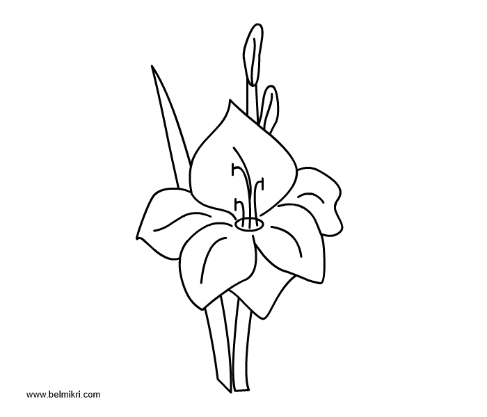 alstroemeria coloring pages - photo#22