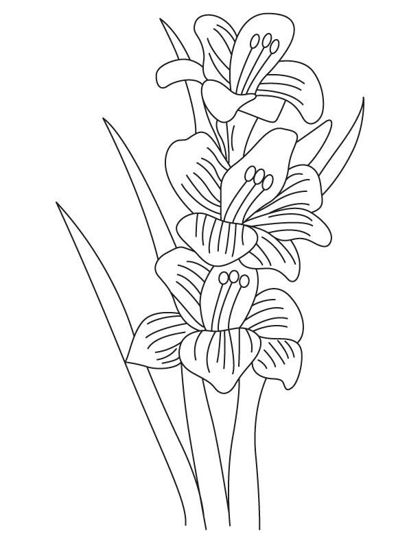 612x792 Gladiolus Bulbous Flowering Plant Download Free Gladiolus