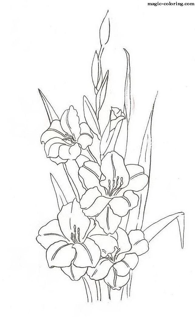 643x1042 MAGIC COLORING Gladiolus Coloring Pages A Mercy Pinterest