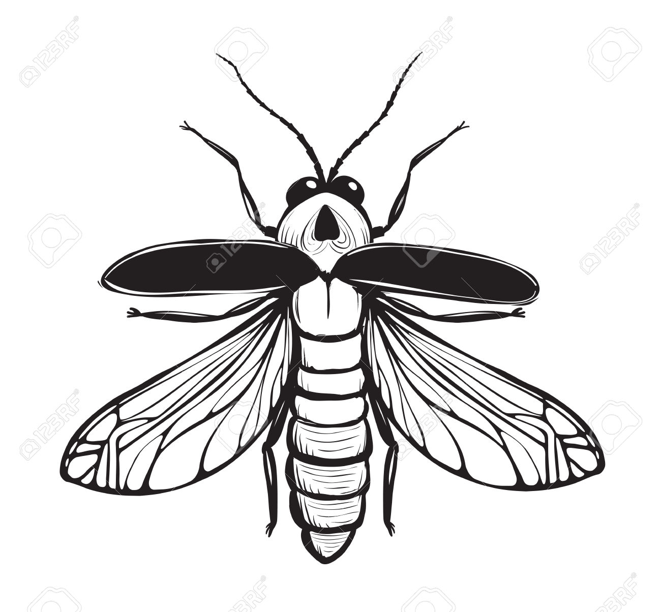 1300x1204 29081734 Firefly Insect Black Inky Drawing Bug Glowworm