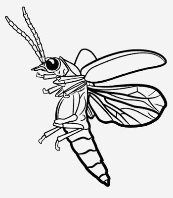 350x400 44 Best Doorbell Images On Fireflies, Glow Worms