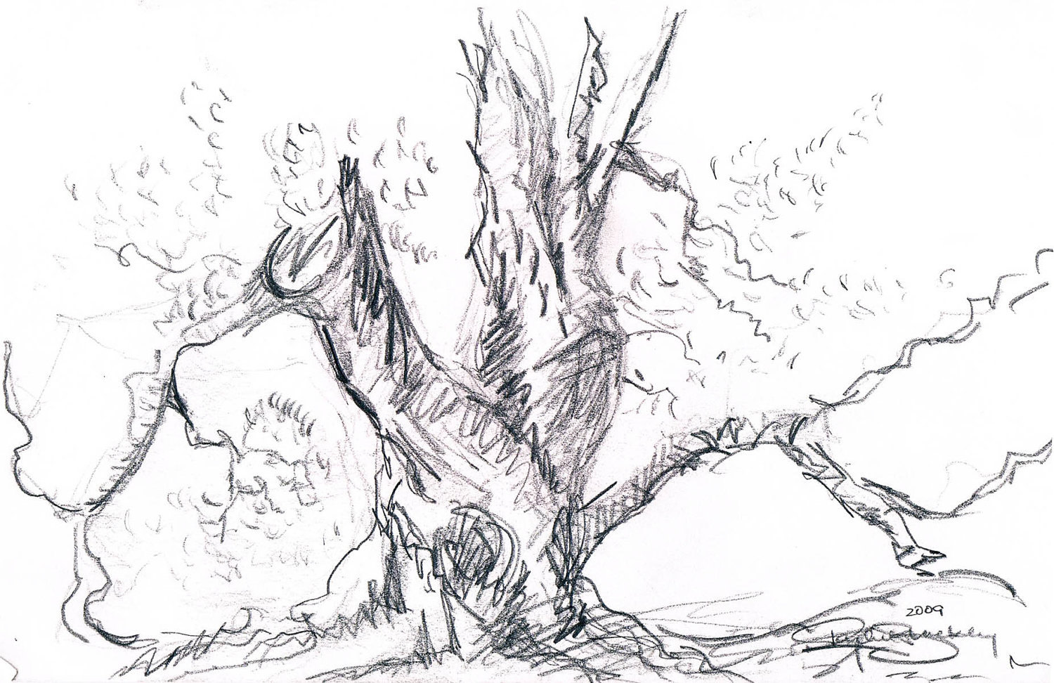 1500x972 Gnarled Tree Ink Sketch Ink Drawing Pen Ink Black