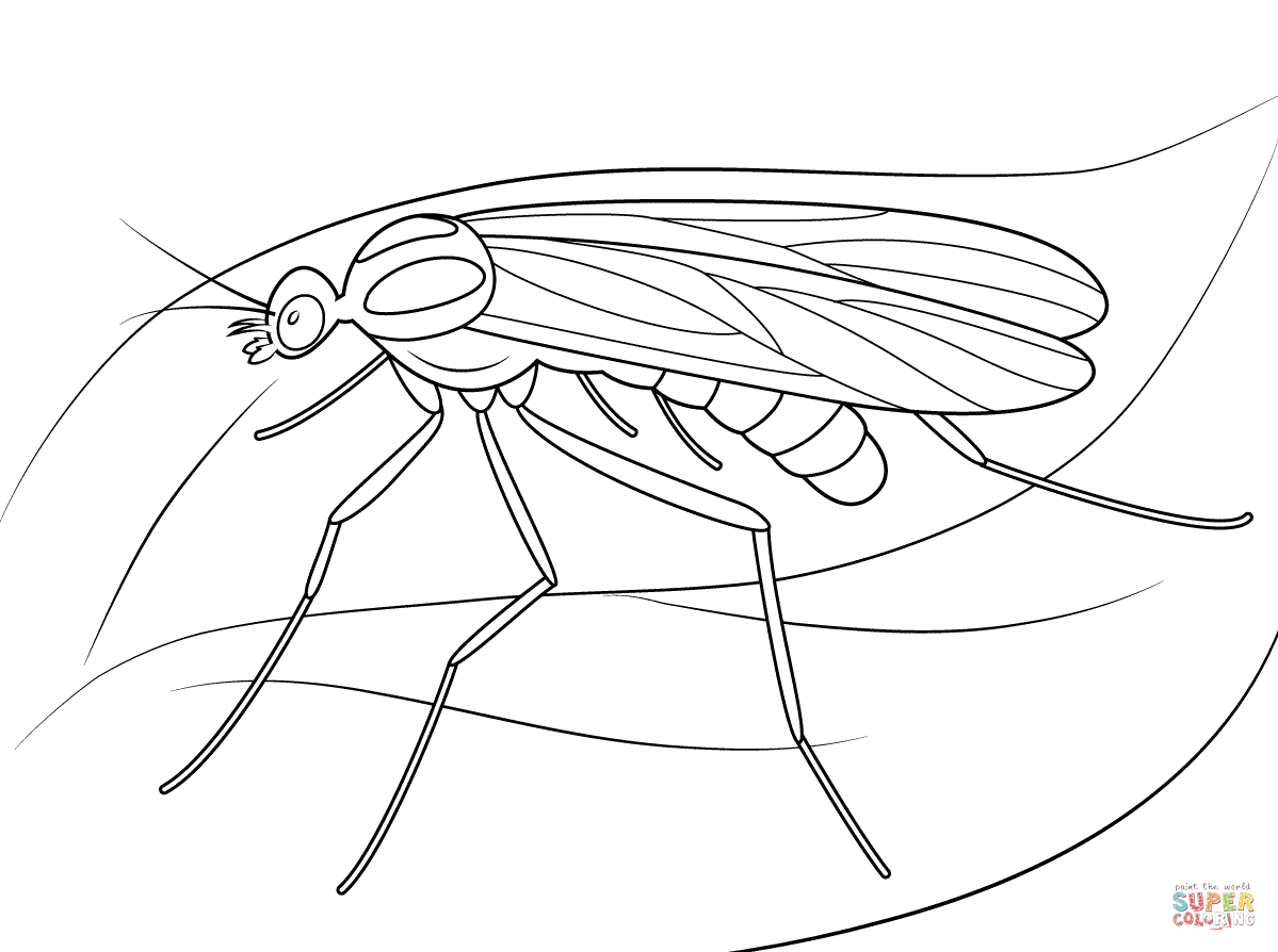 1199x894 Window Gnat Coloring Page Free Printable Coloring Pages