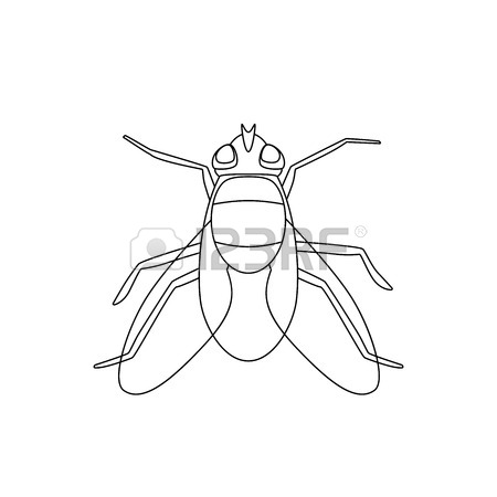 450x450 Black Gnat Midge Stock Photos Amp Pictures. Royalty Free Black Gnat