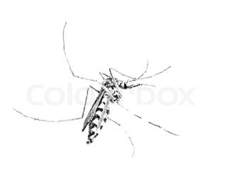320x267 Drawing Gnat Isolated On The White Stock Vector Colourbox