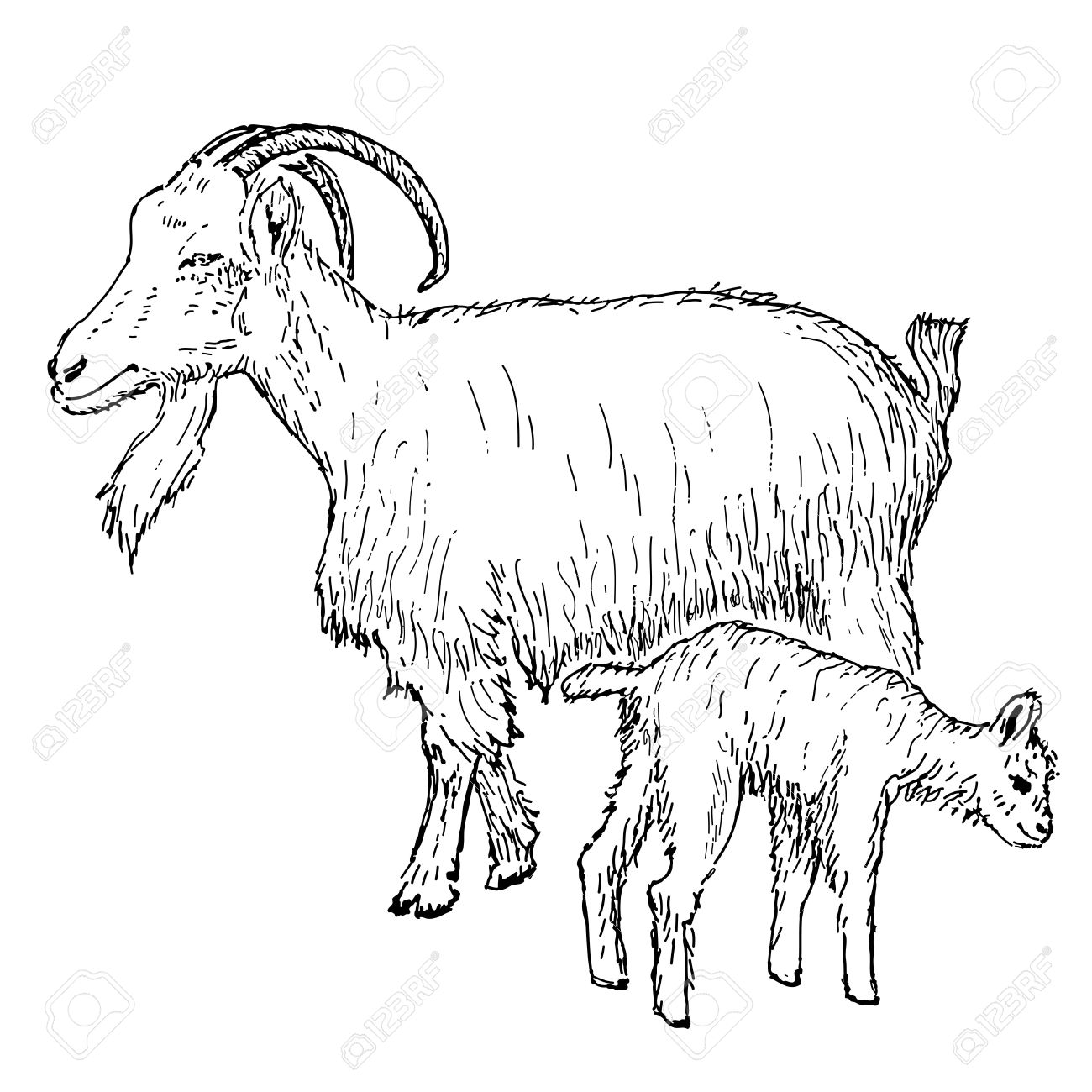 1300x1300 Goat With Kid Hand Drawing Set Of Vector Sketches Royalty Free