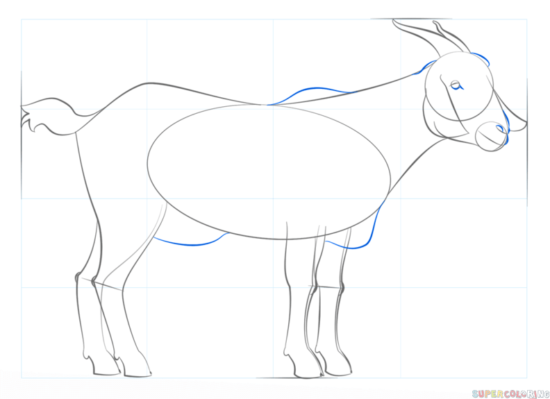 792x575 How To Draw A Goat Step By Step Drawing Tutorials