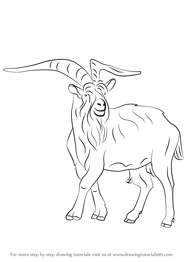 596x842 Learn How To Draw A Wild Goat (Wild Animals) Step By Step