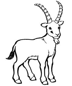 236x283 Goat Drawing